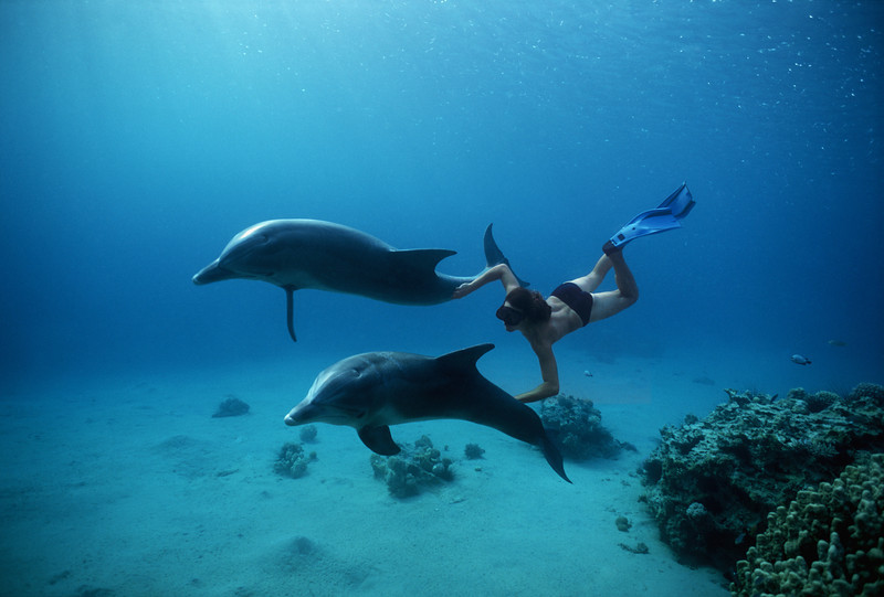 Swim with dolphins in El Gouna