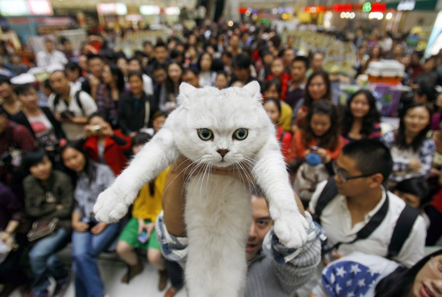 Chinese Young People Love Their Cats